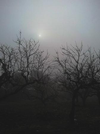 霧のかかった今日の朝